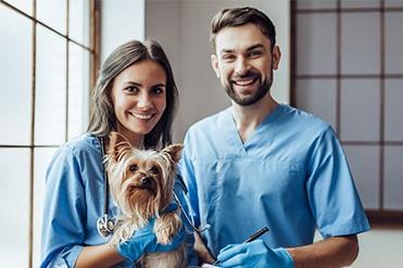 Állatorvosi asszisztens szakmai képzés