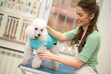 Kutyakozmetikus szakmai képzés