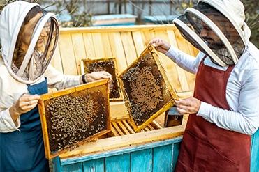 Méhész szakmai képzés