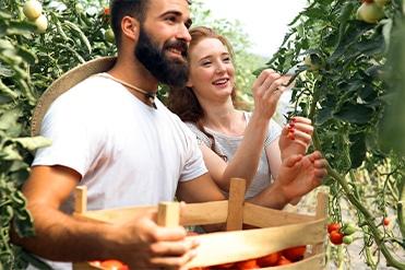 Zöldség- és gyümölcstermesztő szakmai képzés